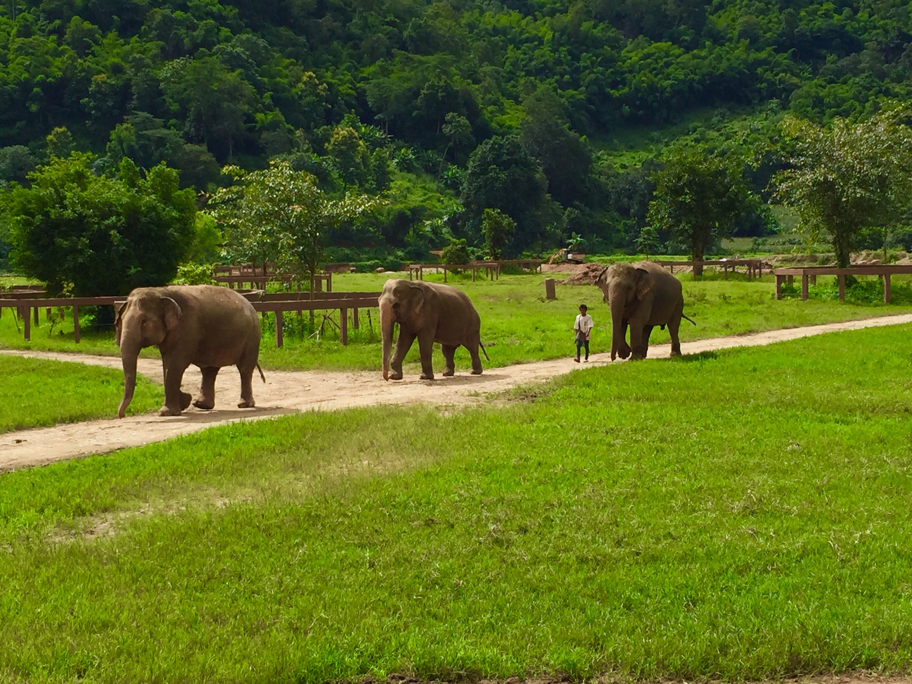Chiang Mai Elephant Nature Park: Rescued Lives & A New ...